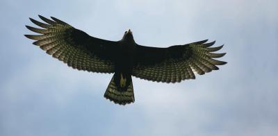 Las Aguilas Negras